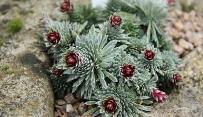 inVia Raman microscope aids discovery of rare mineral in alpine plants